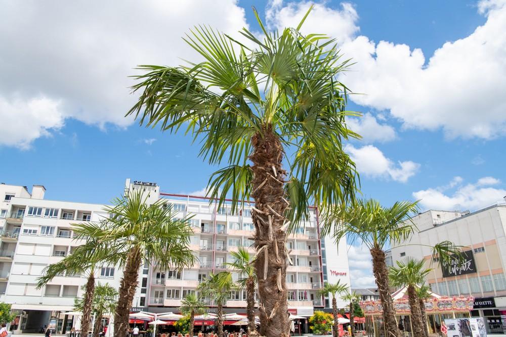 15 palmiers pour une ambiance estivale